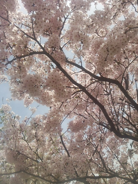 桜空.JPG