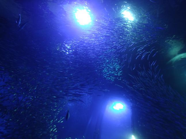 海のトンネル.JPG